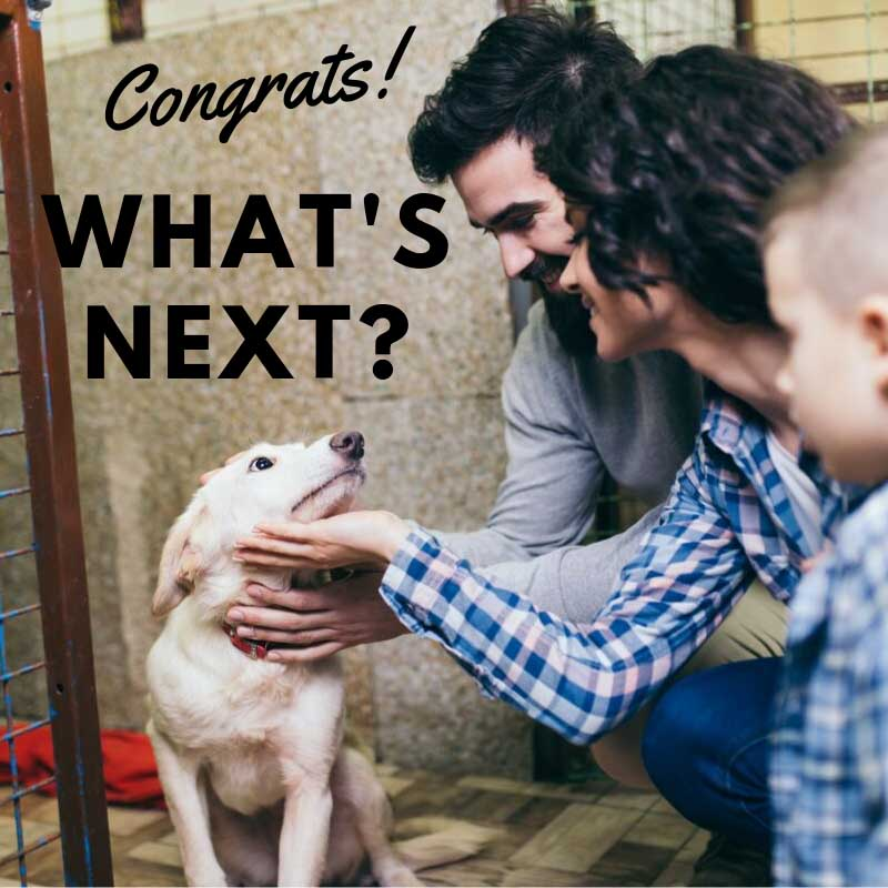 Congrats What's Next - New Dog Owner
