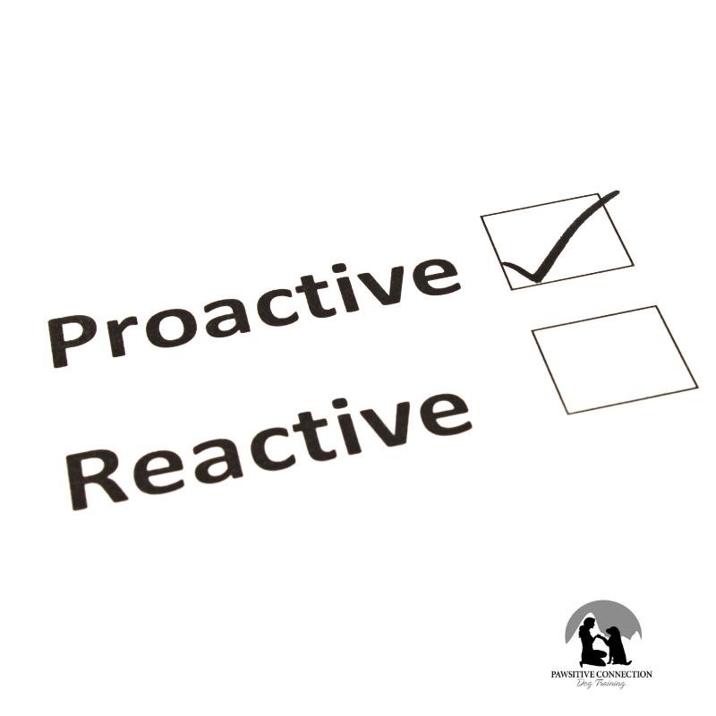 Proactive vs Reactive Dog