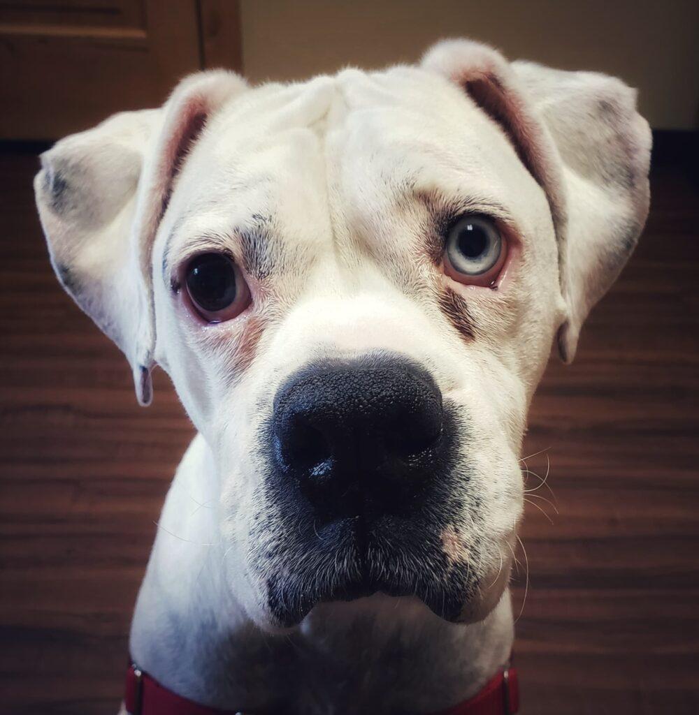 Bam Dog Face