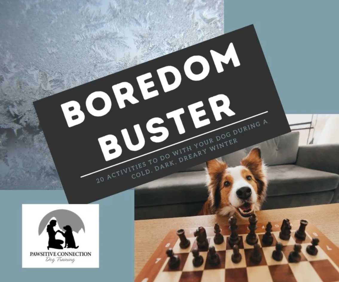 Boredom Buster - Online Dog Training
