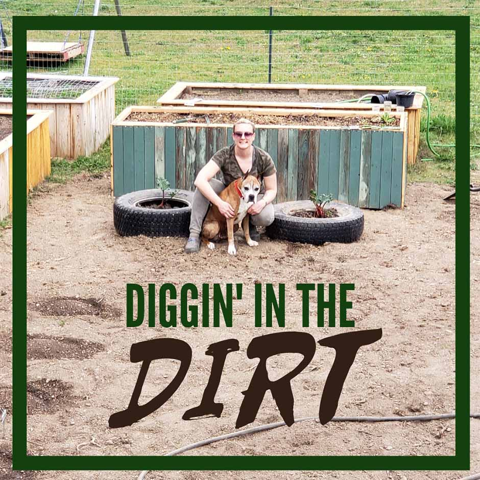 Dog digging in the dirt