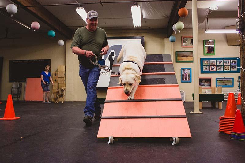 Dog Training Fun - Pawsitive Connection - Spokane, WA