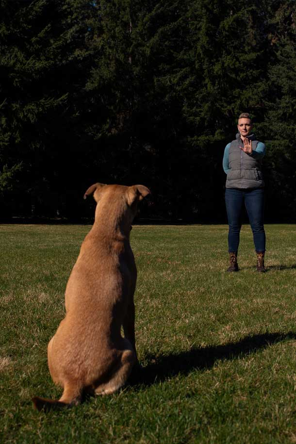 Dog Training At Home Classes