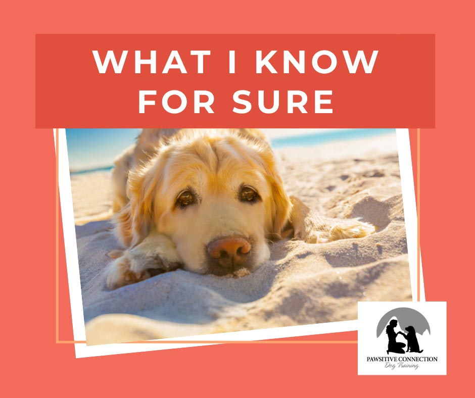 Know for Sure - Dog