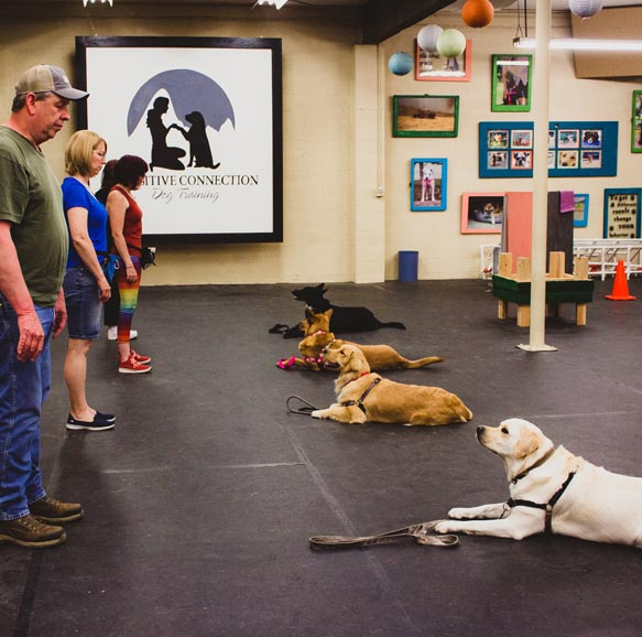 Obedience Dog Training Classes