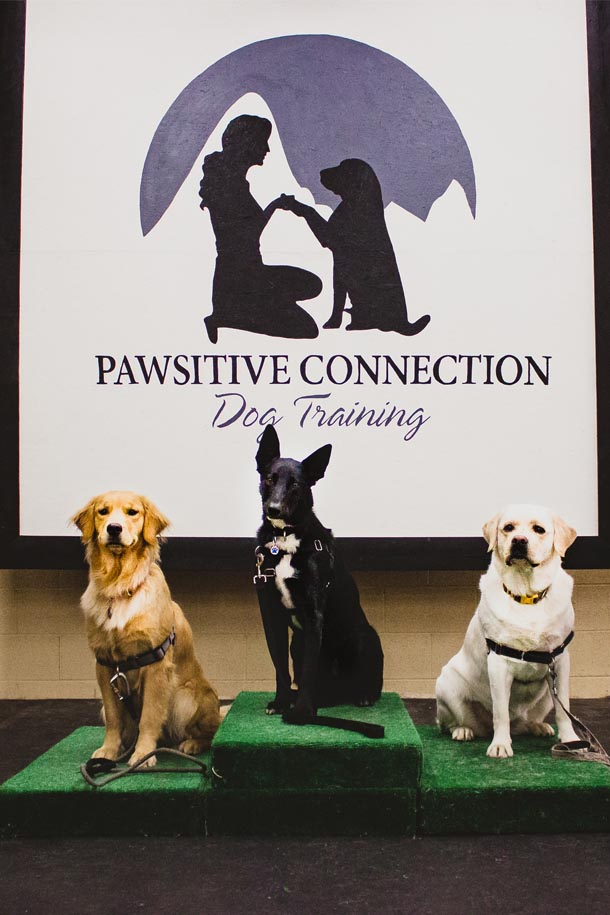 Pawsitive Connect Dog Training - Contact Us