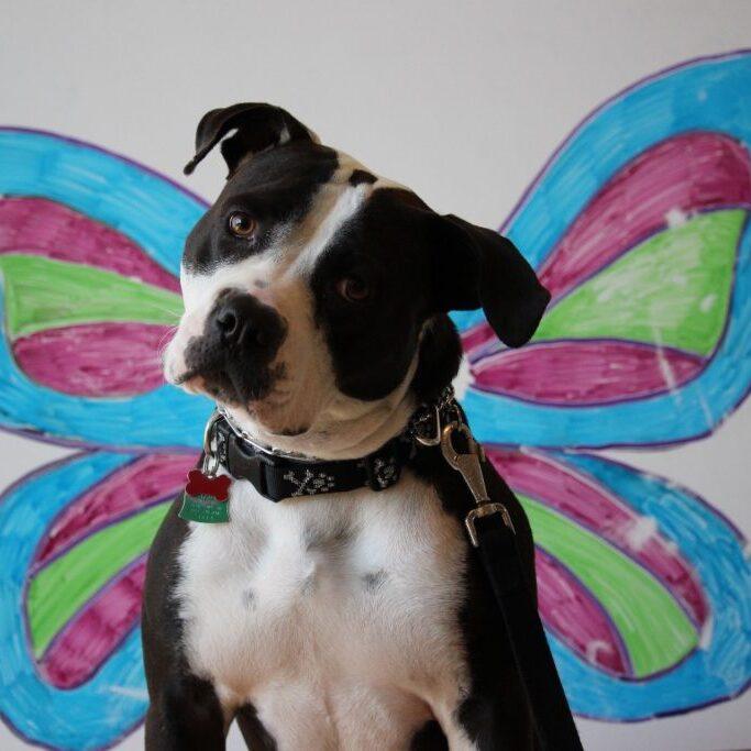 Dog Puppy Success Story - Addy & Minnow
