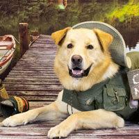Dog Training - Timber