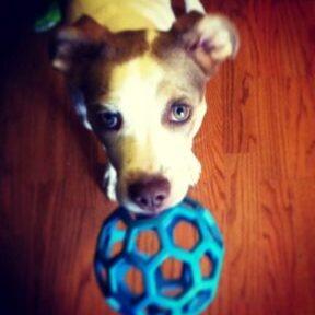 Shelly - Dog Success Story